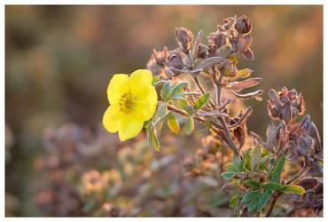 November plants IV by KKokosz