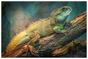 The Lizard by KKokosz