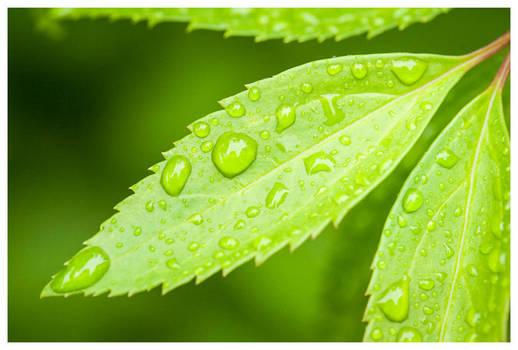 Waterdrops in the garden III