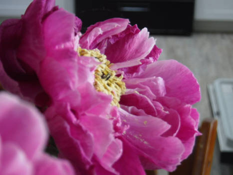 kitchen flower