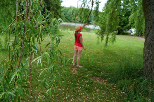 Behind the Willow