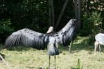 Bird stock 5