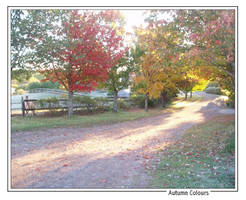 Autumn Colours by burn-out-alibi