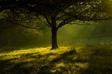 Tree in the morning