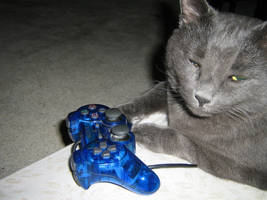 My cat loves video games. by Rocky-Winter