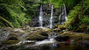 Glenariff forest II
