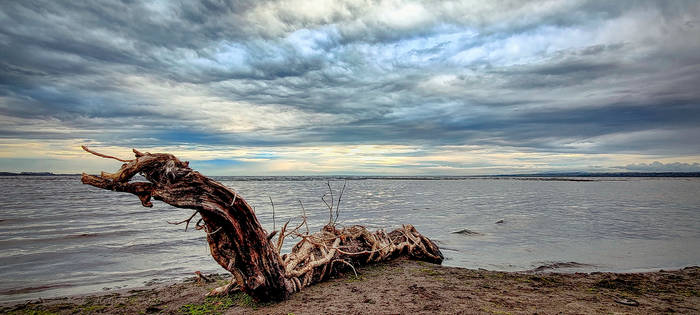 wooden dragons of the lake Lough Neagh - N.Ireland