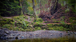 Tollymore forest - N.Ireland