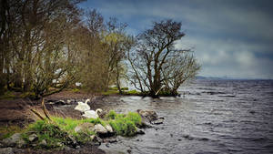 Antrim - N.Ireland