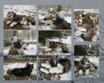 Laying Wolf Plushie more pics by Samurai-Akita