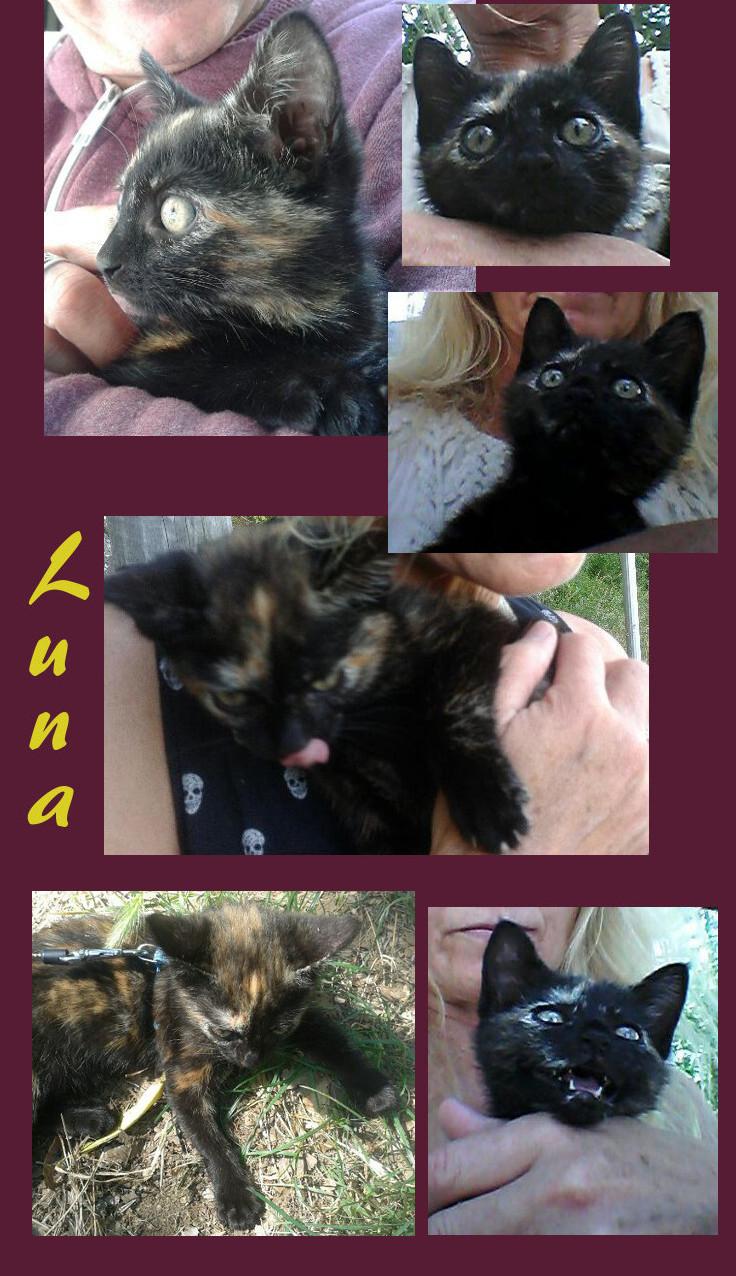 tortie rescue Kitty Luna by Samurai-Akita