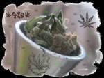 weed 8