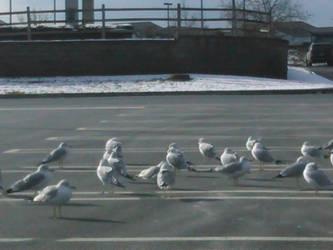 Seagulls at the parking lot by Lark-Catalpa-Royal8
