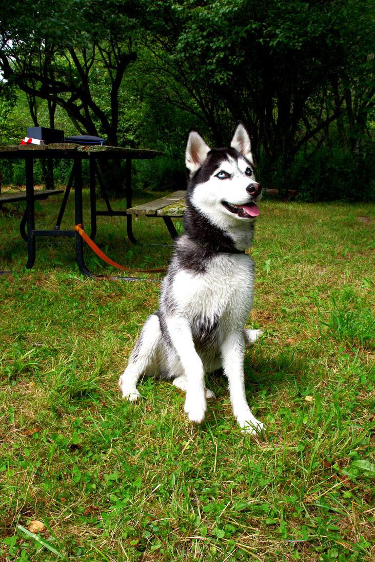 wolf! I by mdylantk