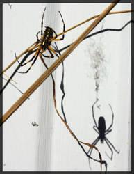 Eh spider IV