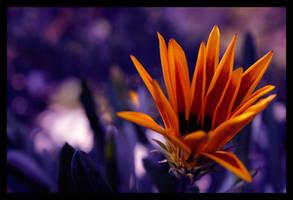 flower by Gshoot