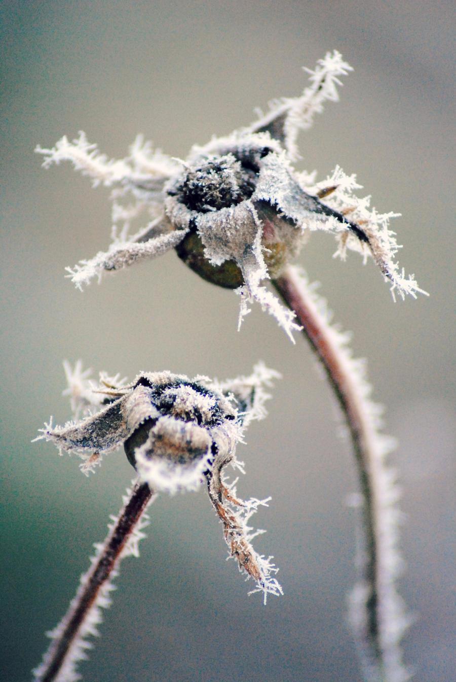 Frost flowers by Kurenai87