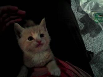 My Little Timmy