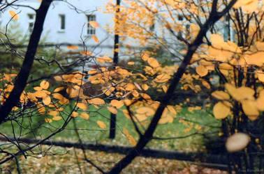 Las hojas by FrauRanunkel