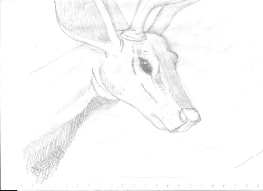 little looking deer. by iLOOOVEmarx