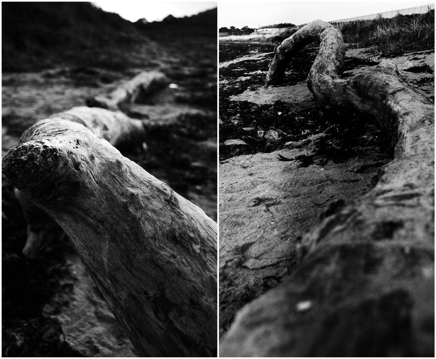 Driftwood by VelvetRedBullet