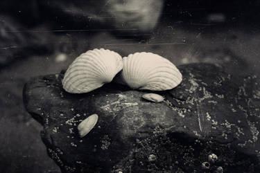 36/52 Seaside Collections by VelvetRedBullet