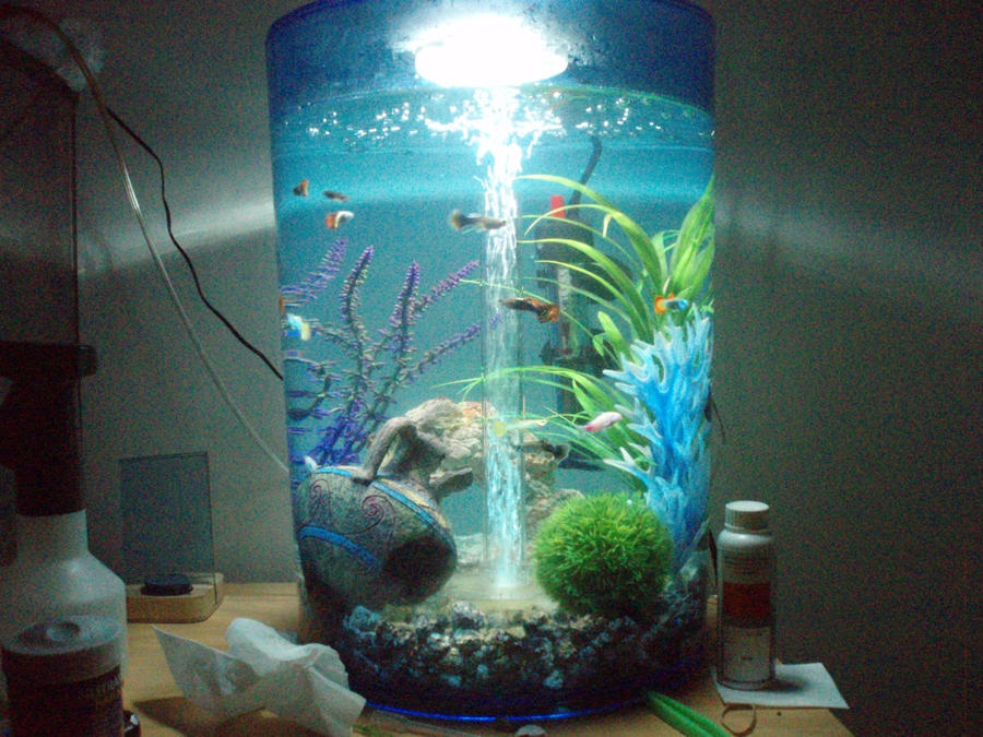 New overstocked fish tank by xcollapsix on deviantart for Fish tank camera