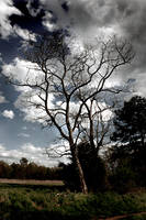 Tree by HiddenViolence