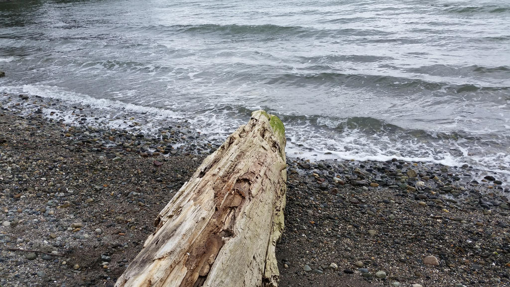 Water-Logged by CelestialOrca