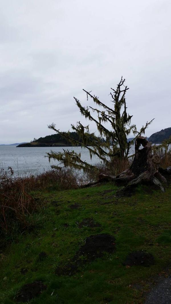 Old Tree by Deception Bay by CelestialOrca