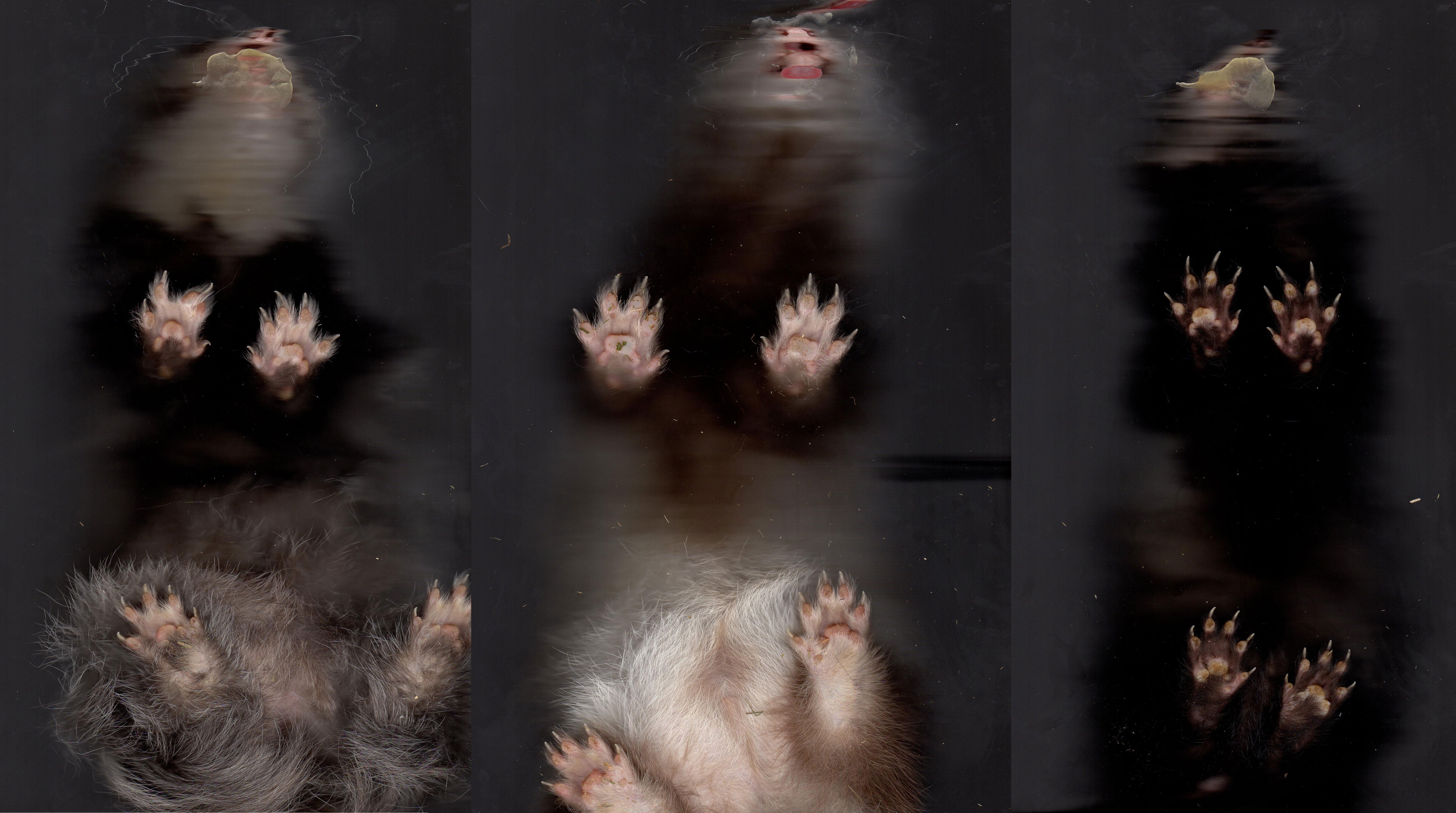Ferret paw pads by Shegoran