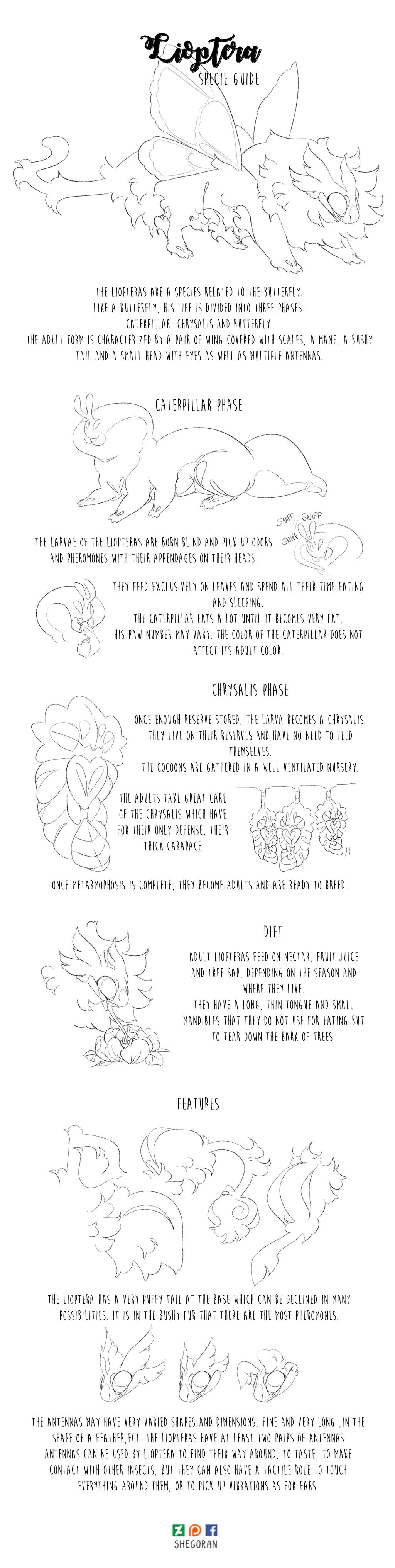 Lioptera specie guide by Shegoran