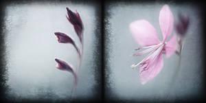 Metamorphose by Cristel-m