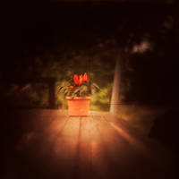 Spicy-'TTV' by Cristel-m