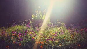 Soaking Up The Light