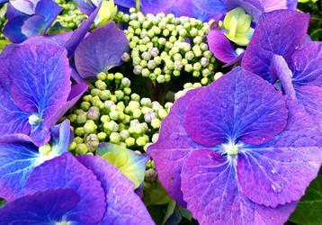 vibrant violet by GraceDoragon