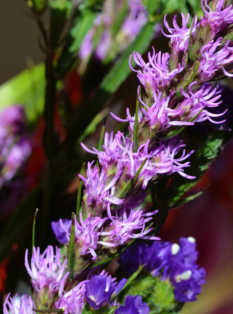 Flower by GraceDoragon