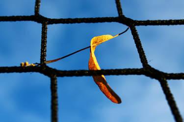 Leaf in Net by GeorgeAmies