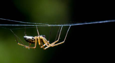 Creepy Spider by GeorgeAmies