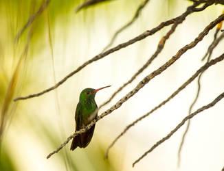Humming Bird by GeorgeAmies