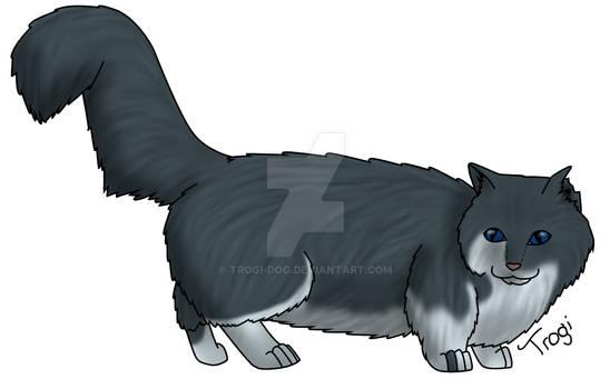 Sage Kitty