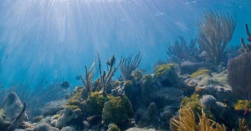 Underwater Textures Underwater Texture 2 By