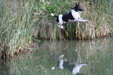 Flying Dog Julie
