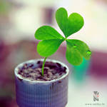 Planting a Little Luck... by its-saiby