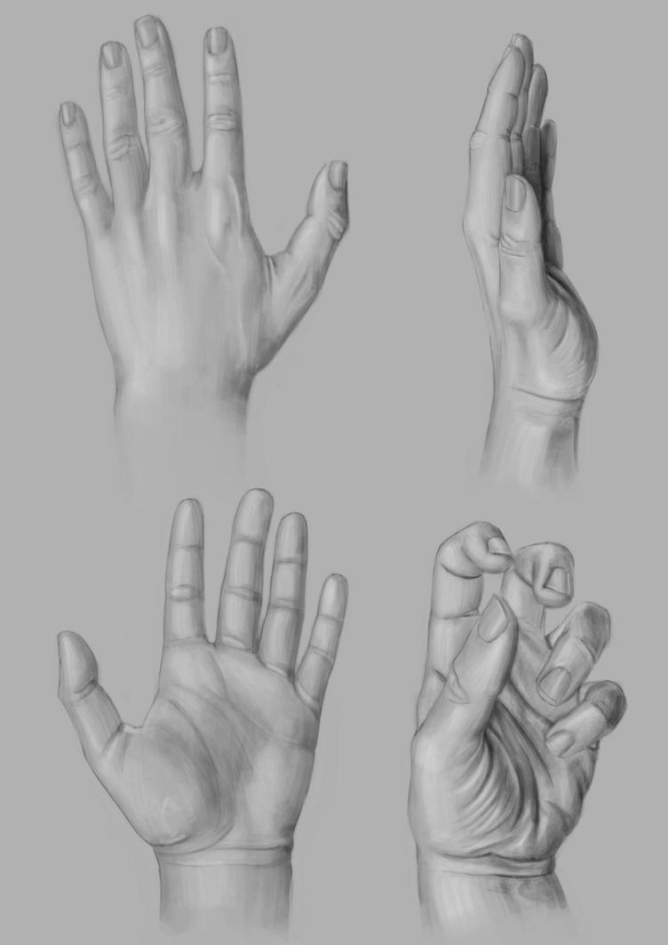 Anatomy-Hands by VMP82 on DeviantArt