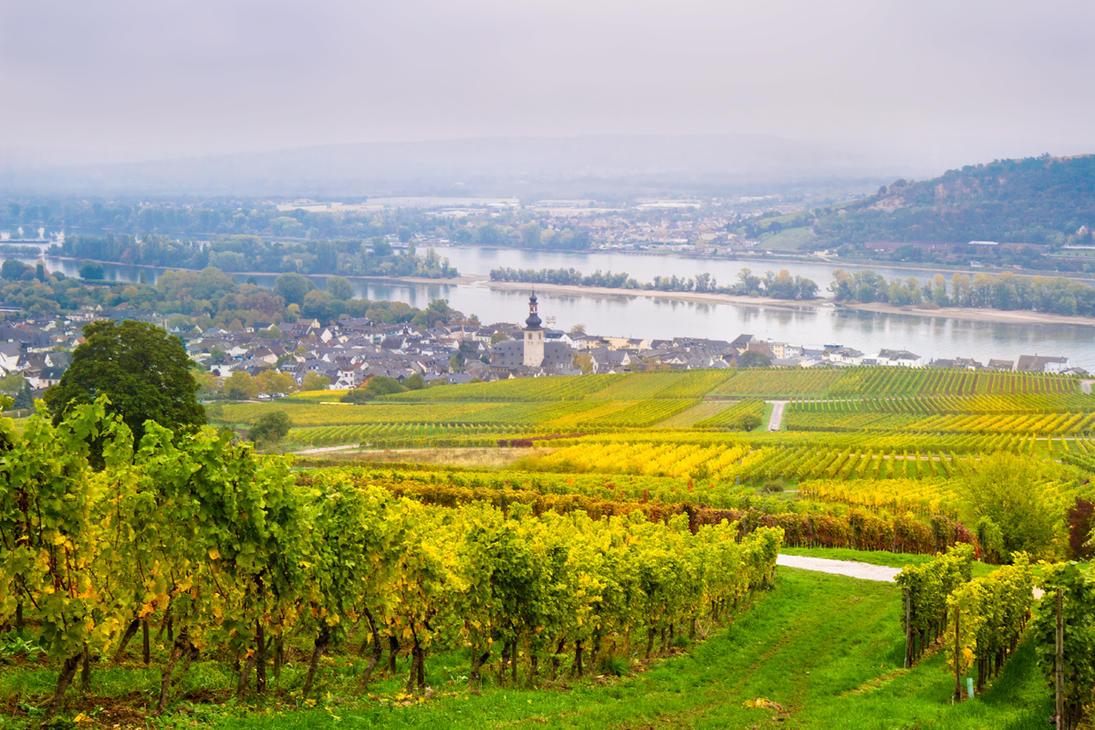 Rudesheim am Rhein by Avestra