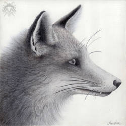 Metalpoint Drawing: Red Fox Profile