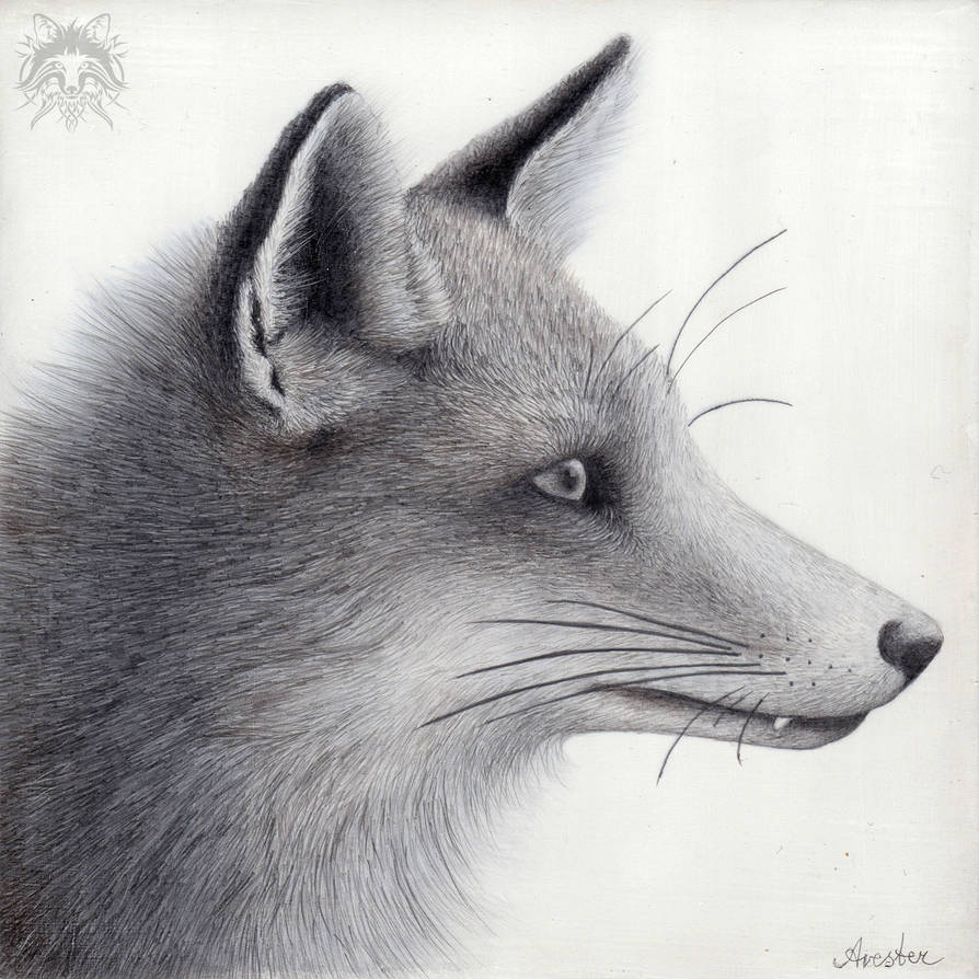 Metalpoint Drawing: Red Fox Profile by AndreasAvester