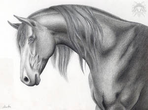 Horse Head in Metalpoint