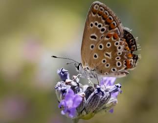 Butterfly I by TomazKlemensak